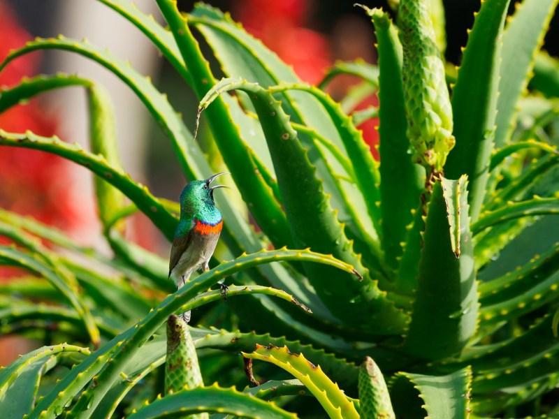 aloe vera easy indoor plants