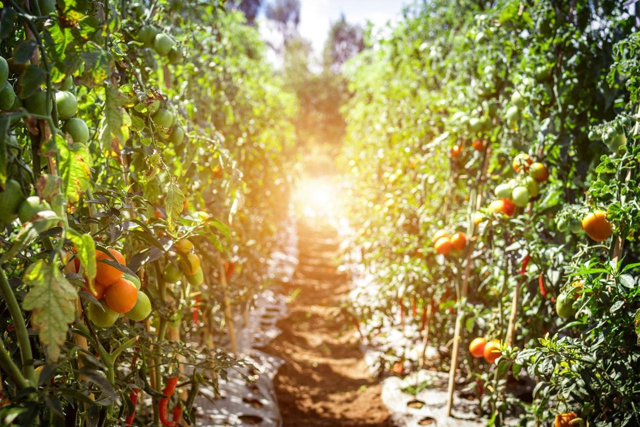 How to Start a Salad Garden Today Even If You're a Beginner Gardener