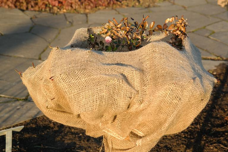 Cold weather herb protection