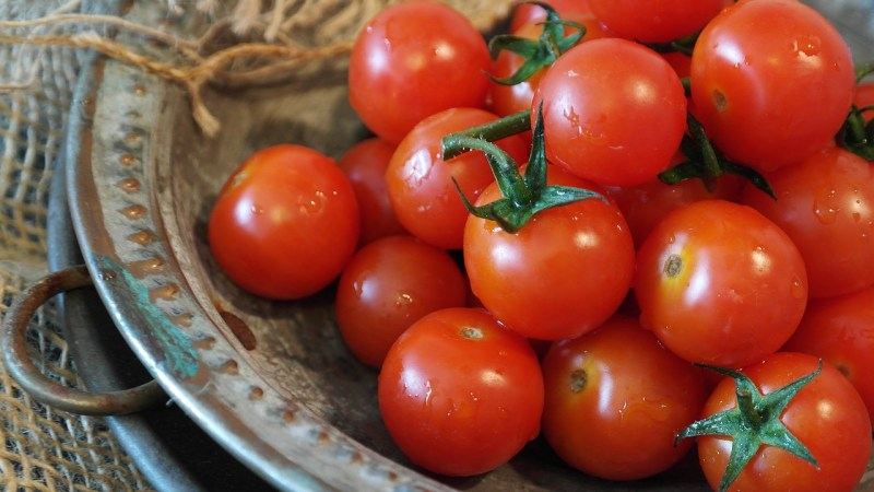 Salad garden tomatoes