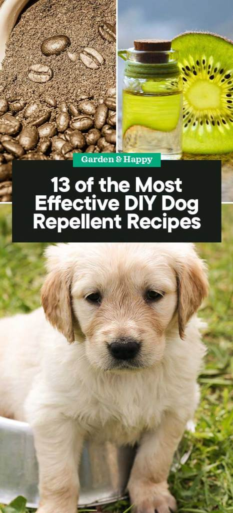Here are 13 natural repellents that you can try to keep your doggo out of trouble. They're all non-toxic methods that are known to work—it just depends on ...