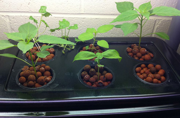Hydroponics system plants growing
