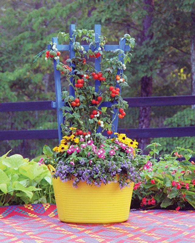 Garden Colorful Trellis