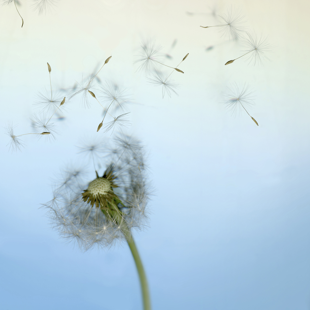 Seed Dispersal Teaching Ideas Garden At School