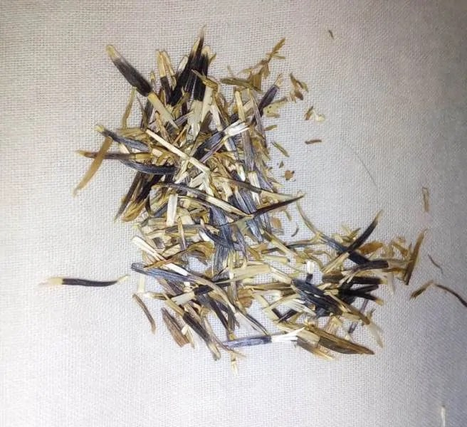 marigold_seeds_collected_dried