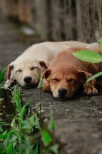 dogs-in-my-garden