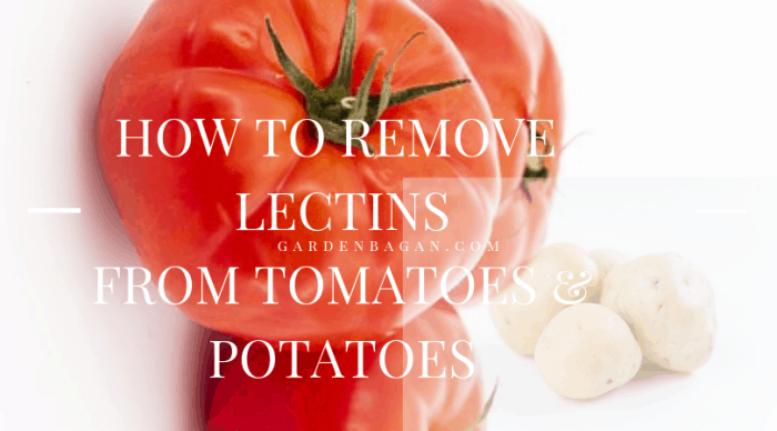 how to remove lectins from tomato and potato