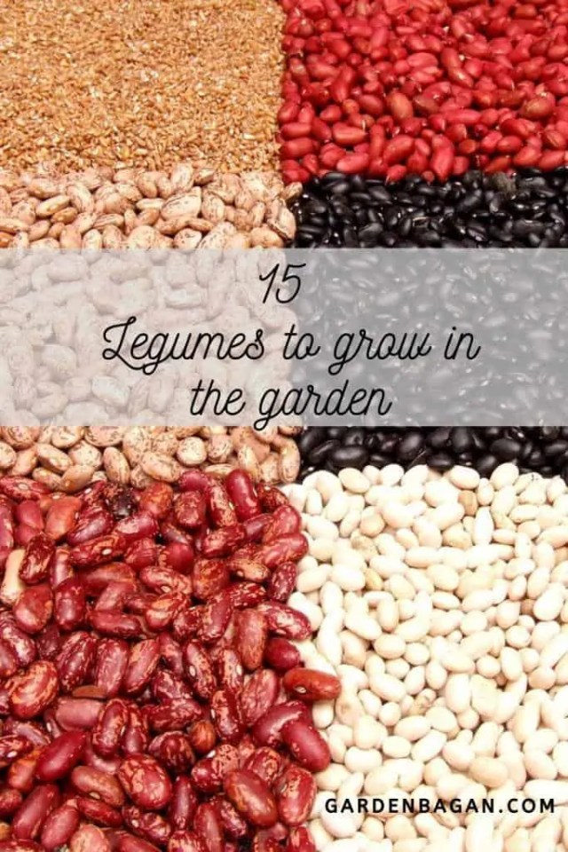 15 Legumes to grow in the garden