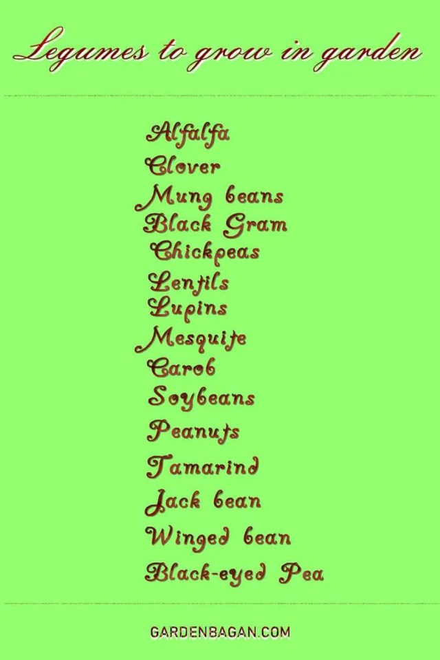 15-legumes-to-grow-in-the-garden