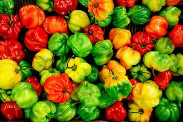 Vegetables to grow in may capsicum