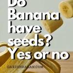 Do Banana have seeds
