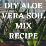 DIY Aloe Vera Soil Mix recipe