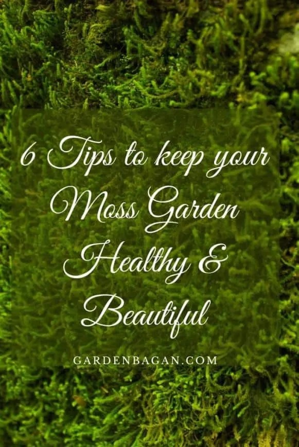 6 Tips to keep your Moss Garden Healthy & Beautiful