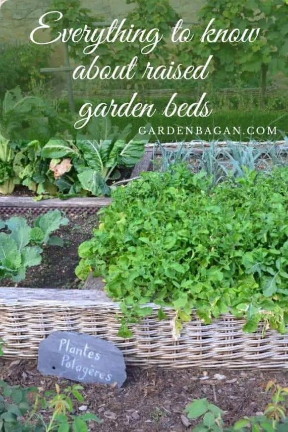 Everything to know about raised garden beds