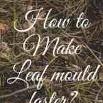 How to Make Leaf mould faster