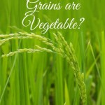 Is Rice, Wheat Grains are Vegetable