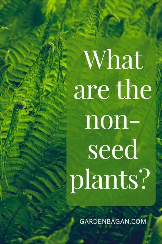What are the non-seed plants