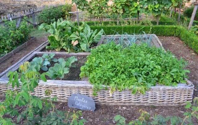 well-organised garden beds
