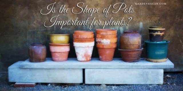 Is the Shape of Pots Important for plants