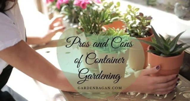 Pros and Cons of Container Gardening