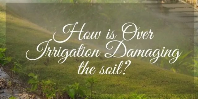 How is Over Irrigation Damaging the soil