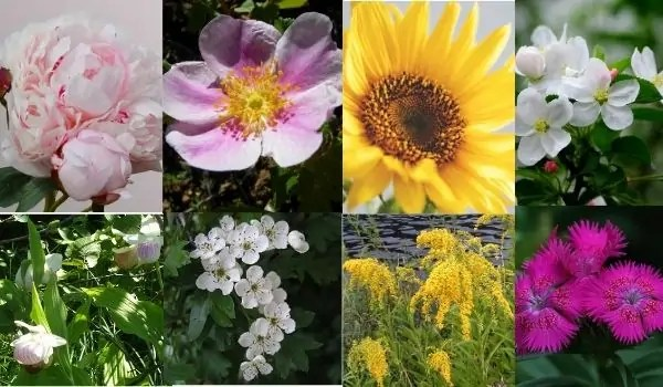 Midwestern State Flowers