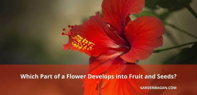 Which Part of a Flower Develops into Fruit and Seeds