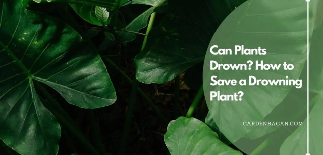Can Plants Drown How to Save a Drowning Plant