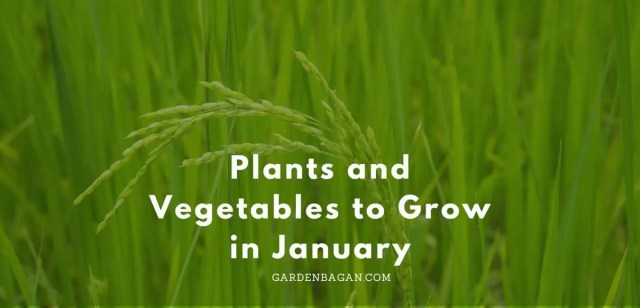 Plants and Vegetables to Grow in January
