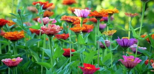 Spring Yard Clean up List: Garden Preparation