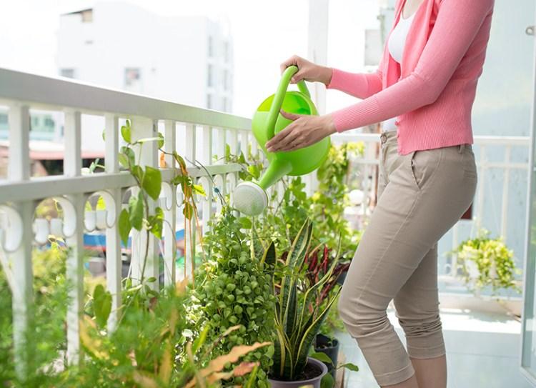 Balcony Gardens Ideas 5 Tips For Creating A Beautiful Balcony Garden