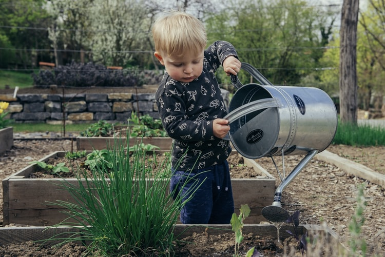 A young boy with blonde hair lifts a watering can and waters a raised bed with chives and other greens.