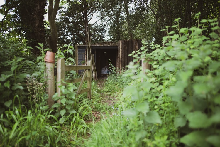 A garden shed and surround wooden splitrail fence are overgrown with thick green weeds of all sorts.