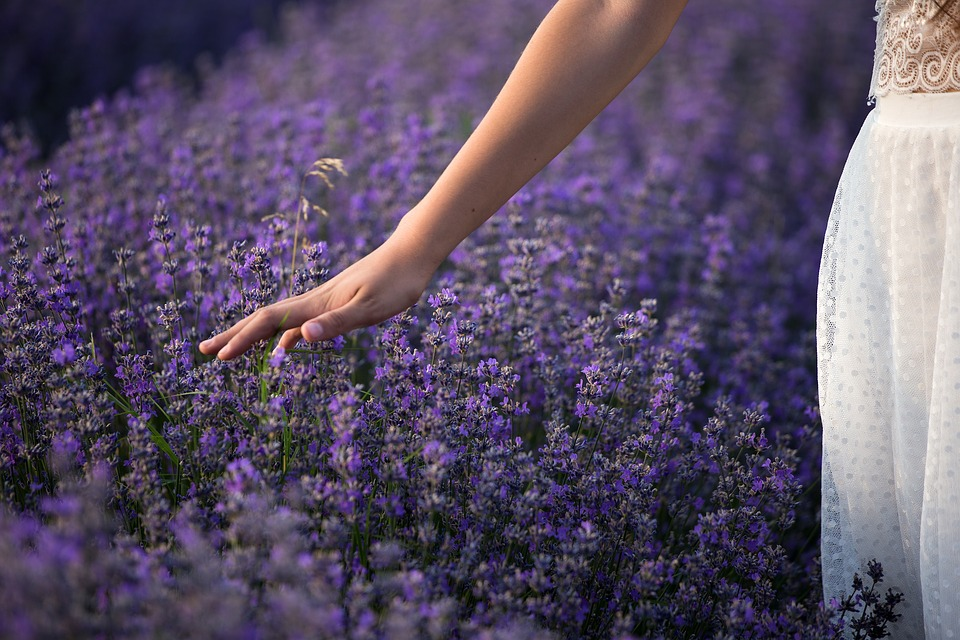 A woman in a white dress with a wide golden waist band runs her down-turned palm through a sea of lavender growing in a field she walks through.