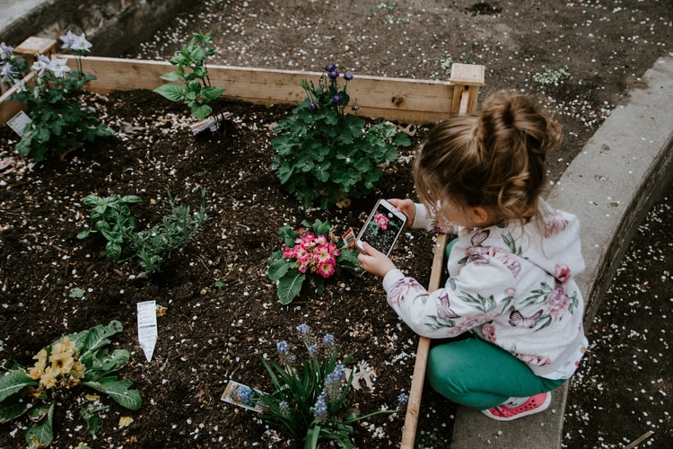 A young girl takes a picture of flowers growing in a raised bed.