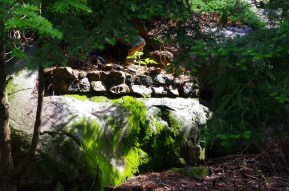 Loving the moss that is growing on the rock - the rain this spring has helped