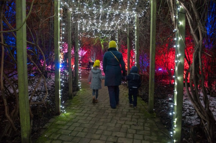 Electric Gardens Will Be Back To Light Up The Botanics with Botanic Garden Glasgow Light Show