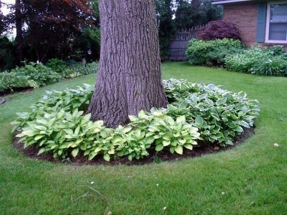 25+ Best Ideas About Front Yard Tree Ideas On Pinterest | Yard with regard to Landscaping Ideas For Front Yard With Trees