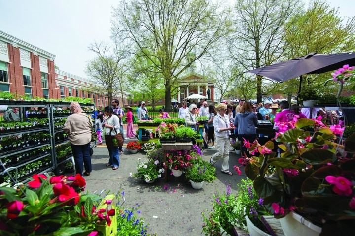 Leesburg Celebrates Spring With Flower And Garden Festival – Loudoun Now intended for Leesburg Flower And Garden Festival Hours