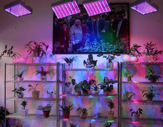 Cheap LED growing lights offer poor indoor garden results.
