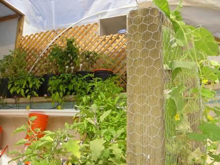 Inside Garden Pool Greenhouse