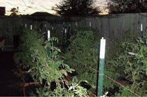 Nano Farm: Serious Urban Growers