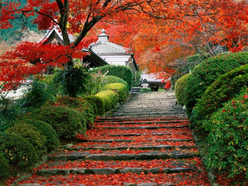 Beautiful Japanese autumn colour : image gallery (2/6)