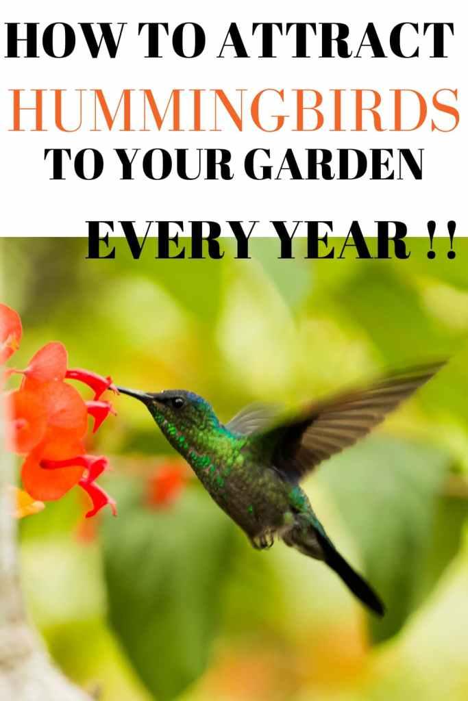 keep hummingbirds coming back