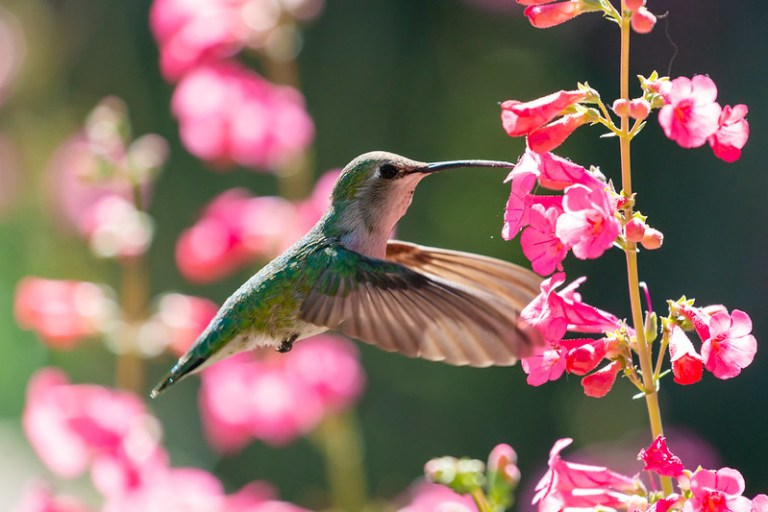 Top 10 Flowers to Attract Hummingbirds