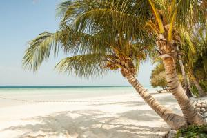 Picking the Best Palm Trees for Landscaping