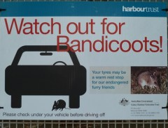 Watch out for Bandicoots!