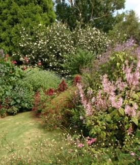 GardenDrum CStewart iGarden rich tapestry of salvia
