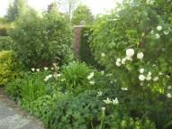 GardenDrum BFeistel 6 - spring 2012 with white tulips, & viburnum