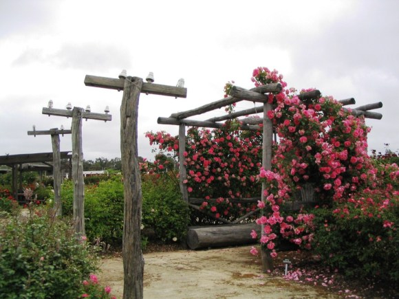 Power poles and rose arbour